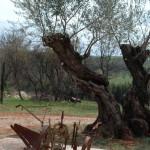 L'Istria Verde:….La Busa, Le Figuline e La Supa